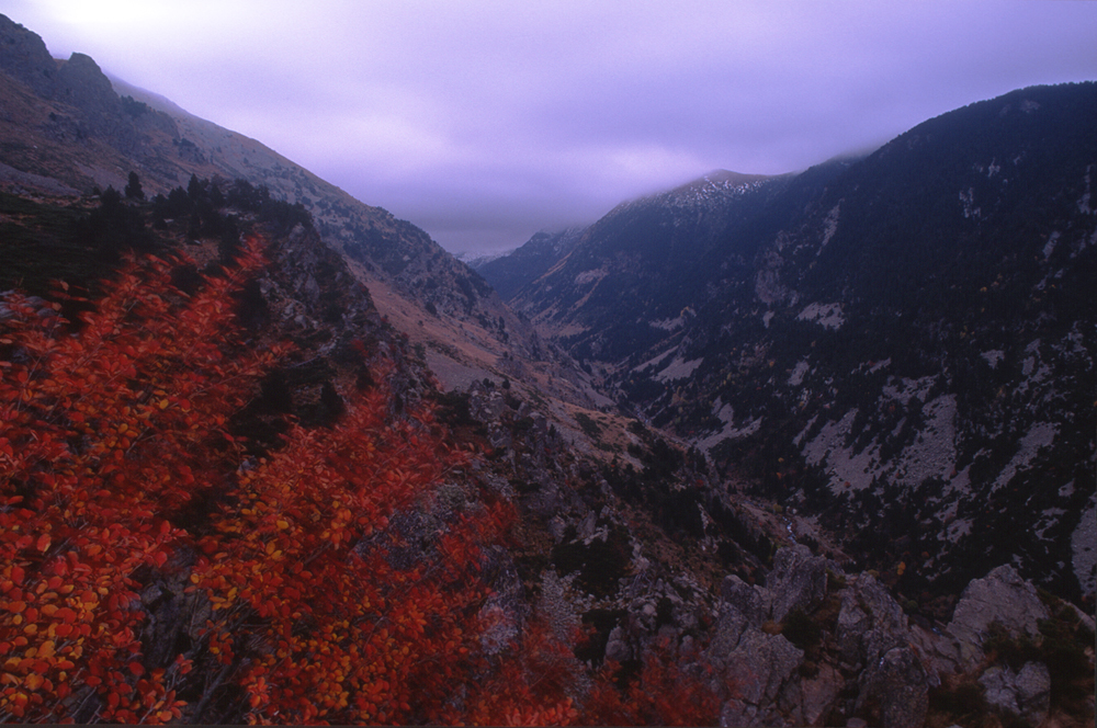automne-sur-la-vallee-d-eyne