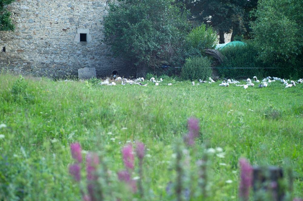 village-d-Eyne-15