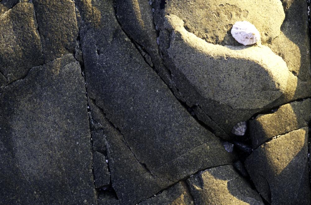 Detail-de-roche-bretagne-7